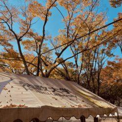正門のテントの上には落ち葉が少しずつ増えています。