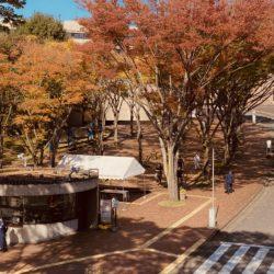 紅葉が赤く染まった時期の多摩キャンパス正門です。
