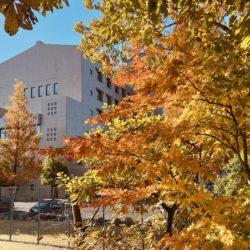 スポーツ健康学部の周辺も紅葉が綺麗に色づきました。