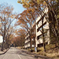 研究実験棟から体育棟まで続く道の紅葉も綺麗です。