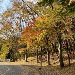 法政大橋に向かう道では、色鮮やかな紅葉が見られます。