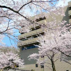 総合棟の桜です。