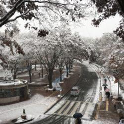 雪が降っている多摩キャンパス正門の写真です。