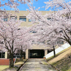 現代福祉学部棟の裏道は例年桜が綺麗に満開するスポットです。
