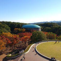 EGG DOMEから円芝まで綺麗な紅葉を見ることができます。