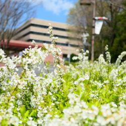 桜以外にも春を感じられる要素はたくさんあります!