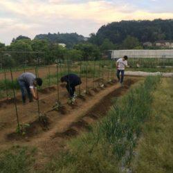 農業サークル「Community Field」