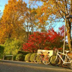 駐輪場 + 紅葉 + 夕日