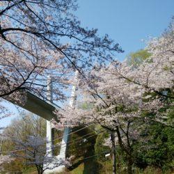 Vブリッジを通るたびに春を感じられます。