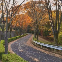 法政大学城山サッカー場まで行く道の紅葉です。