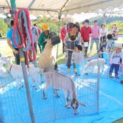 小動物と触れ合える移動動物園企画です。