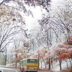 紅葉の最中にも雪が降る場合があります。